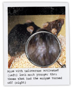 Mice_polaroid
